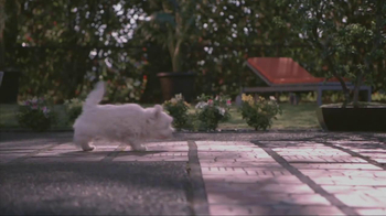 Banfield Pet Hospital TV Spot, 'Molly' - Thumbnail 3