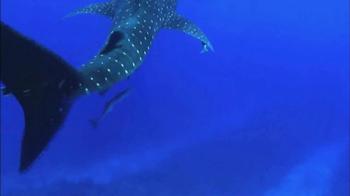 Oceana TV Spot, 'Whale Sharks' Featuring January Jones - Thumbnail 2