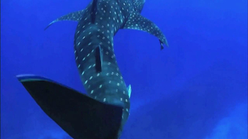 Oceana TV Spot, 'Whale Sharks' Featuring January Jones - Thumbnail 3