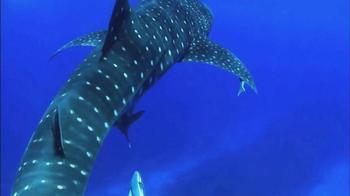 Oceana TV Spot, 'Whale Sharks' Featuring January Jones - Thumbnail 4