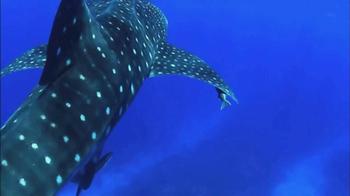 Oceana TV Spot, 'Whale Sharks' Featuring January Jones - Thumbnail 5