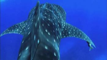Oceana TV Spot, 'Whale Sharks' Featuring January Jones - Thumbnail 6