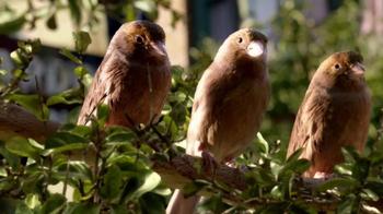 2013 Nissan Pathfinder TV Spot, 'Parallel Parking Birds' - Thumbnail 7