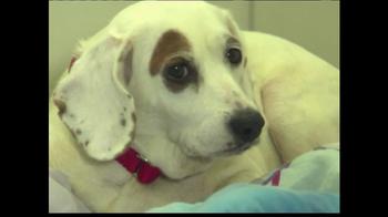 ASPCA TV Spot 'Help Wounded Pets' - Thumbnail 1