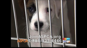 ASPCA TV Spot 'Help Wounded Pets' - Thumbnail 10