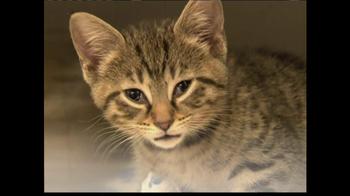 ASPCA TV Spot 'Help Wounded Pets' - Thumbnail 5