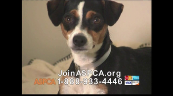 ASPCA TV Spot 'Help Wounded Pets' - Thumbnail 7
