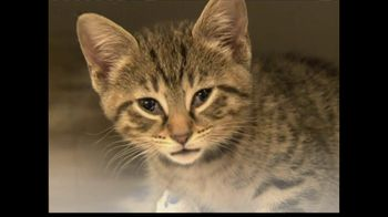 ASPCA TV Spot 'Help Wounded Pets'