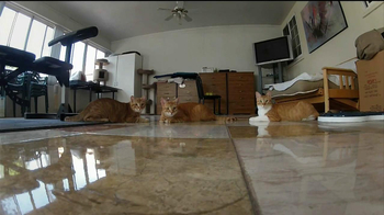 GoPro HERO3 TV Spot, 'Laser Cats'