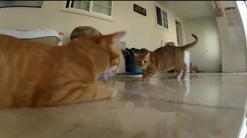 GoPro HERO3 TV Spot, 'Laser Cats' - Thumbnail 6