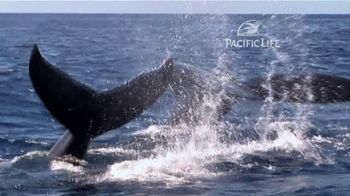 Pacific Life TV Spot, 'Whale'