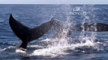 Pacific Life TV Spot, 'Whale' - Thumbnail 6