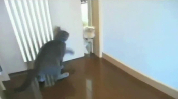 Fresh Step Litter with Carbon TV Spot, 'We Get Cats' - Thumbnail 4