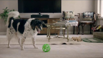 Purina Pro Plan Bright Mind TV Spot, 'Lady' - Thumbnail 9