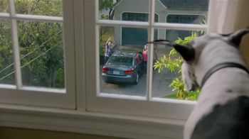 Pergo TV Spot, 'Dog Party' - 3003 commercial airings