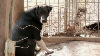 ASPCA TV Spot, 'Unwanted and Unloved' Song by Natalie Merchant