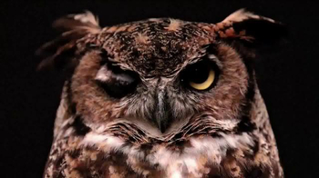 Temple University TV Spot, 'What Makes a Temple Owl' - Thumbnail 8