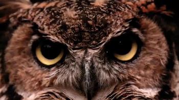 Temple University TV Spot, 'What Makes a Temple Owl'