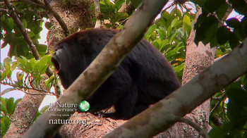 Nature Conservancy TV Spot, 'I'm Yours' Song by Jason Mraz - Thumbnail 2