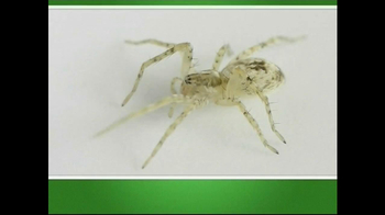 Natural Pest Solutions TV Spot  - Thumbnail 1