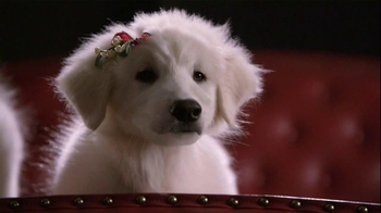 PETCO TV Spot, 'Perfect Gifts' - Thumbnail 1