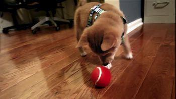 Great Dog thumbnail