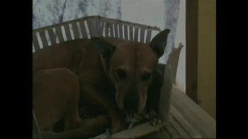 ASPCA TV Spot 'So Beautiful' Song by Joe Cocker - Thumbnail 3