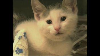 ASPCA TV Spot 'So Beautiful' Song by Joe Cocker - Thumbnail 5