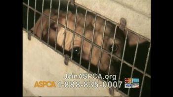 ASPCA TV Spot 'So Beautiful' Song by Joe Cocker - Thumbnail 6