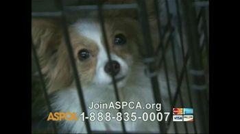 ASPCA TV Spot 'So Beautiful' Song by Joe Cocker - Thumbnail 7