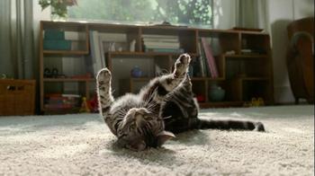 Zyrtec D TV Spot 'Dear Cat'