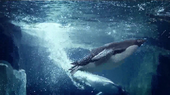 SeaWorld TV Spot, '50th Celebration' - Thumbnail 5