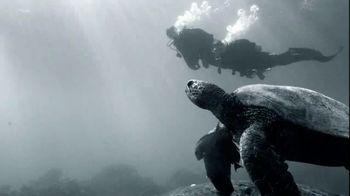 Northern Trust TV Spot, 'Dive In'