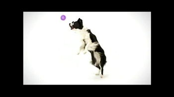 Wellness Pet Food TV Spot, 'All Natural' - Thumbnail 6