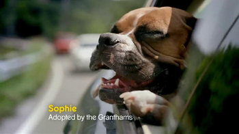 Pedigree TV Spot, 'See What Good Food Can Do' - Thumbnail 5
