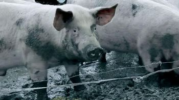 Marinated Pork thumbnail