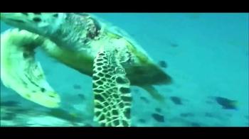 Riviera Maya TV Spot, 'Culture, Wildlife, Fun' - Thumbnail 4