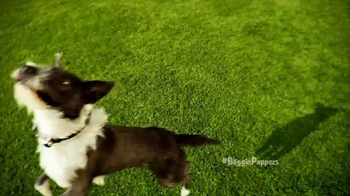 Beggin' Party Poppers TV Spot, 'When Pigs Fly' - Thumbnail 7