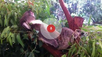 Google App TV Spot, 'Koalas'
