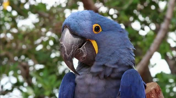World Wildlife Fund TV Spot, 'WWF and Rio 2 Helping to Protect the Amazon' - Thumbnail 2
