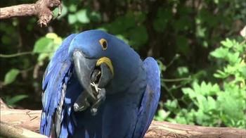 World Wildlife Fund TV Spot, 'WWF and Rio 2 Helping to Protect the Amazon' - Thumbnail 3