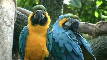 World Wildlife Fund TV Spot, 'WWF and Rio 2 Helping to Protect the Amazon' - Thumbnail 5