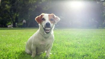 Pedigree Dentastix Deep Clean TV Spot, 'Smile Longer'