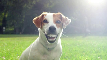 Pedigree Dentastix Deep Clean TV Spot, 'Smile Longer' - Thumbnail 6
