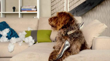 Nest TV Spot, 'Everyone Loves Their Nest DropCam. Except this Dog.' - Thumbnail 3