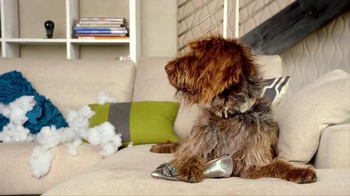 Nest TV Spot, 'Everyone Loves Their Nest DropCam. Except this Dog.' - Thumbnail 4