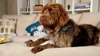 Nest TV Spot, 'Everyone Loves Their Nest DropCam. Except this Dog.' - Thumbnail 5
