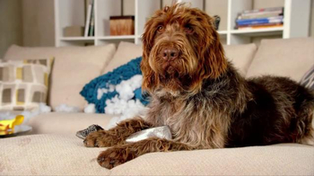 Nest TV Spot, 'Everyone Loves Their Nest DropCam. Except this Dog.' - Thumbnail 6