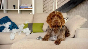 Nest TV Spot, 'Everyone Loves Their Nest DropCam. Except this Dog.' - Thumbnail 8