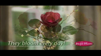 Magic Bloom TV Spot - Thumbnail 4